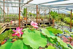 色鮮やかな熱帯スイレンが年中開花しているロータスガーデン
