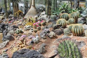 一瞬で異国の地にワープ!数多くのサボテン・多肉植物などに出会える乾燥地植物室